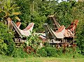 Discover South Sulawesi