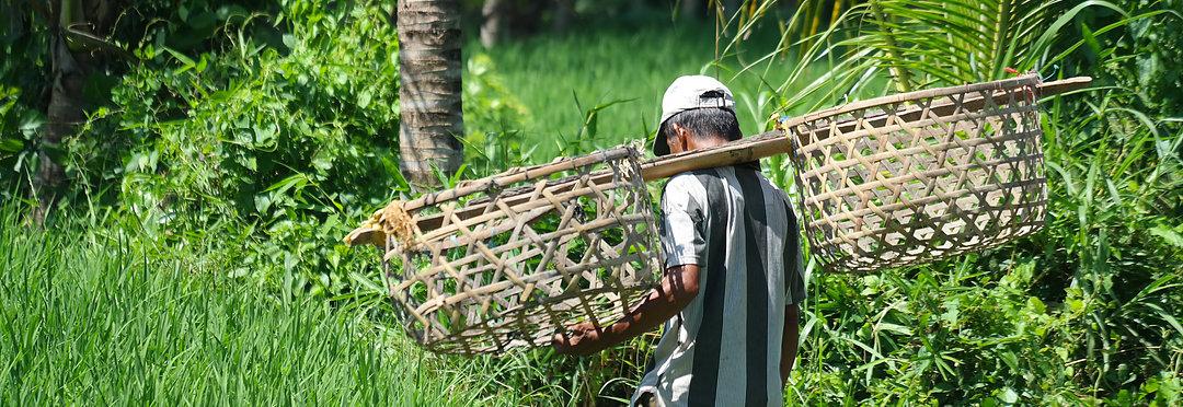 Bestemmingen Bali