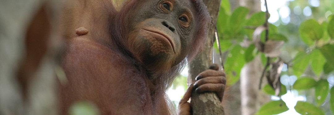 Bestemmingen Sumatra
